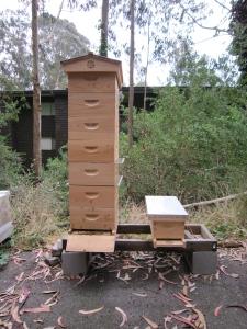 Fog City Bees.